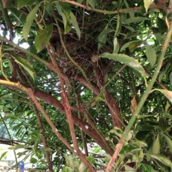 Dag 2761: Leeg nest