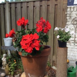 Dag 2780: Mama's tuin