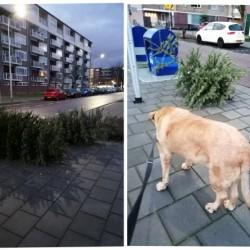 Dag 4050: Kerstbomen