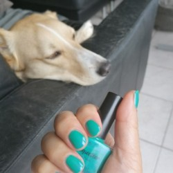 NOTD + Twinmani Tuesday 6 april 2021: CuAl6(PO4)4(OH)8.4H2O (Lacquester)