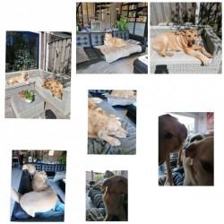 Apollo, Fluffy en Popje week 17-21