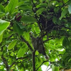 Dag 4322: Nest